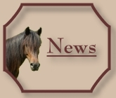 Button-News-CV-Ponyfarm